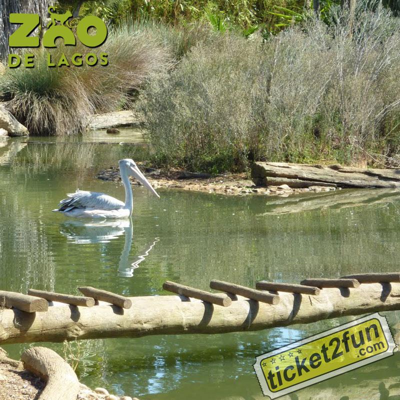 ZooLagos2