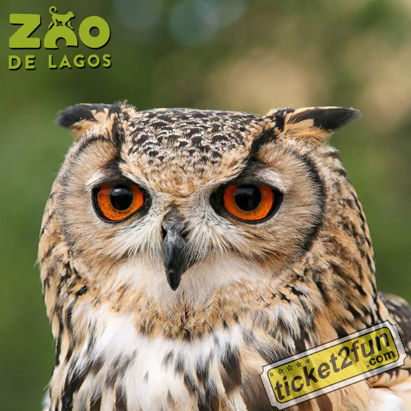 ZooLagos5