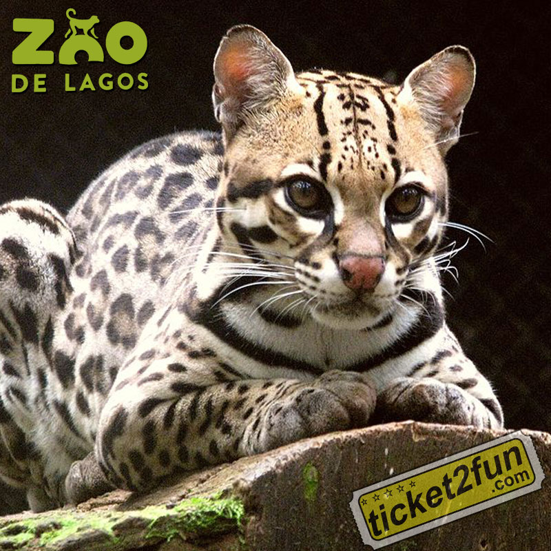 ZooLagos6